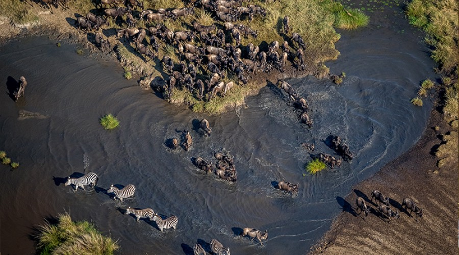 The Great Migration image