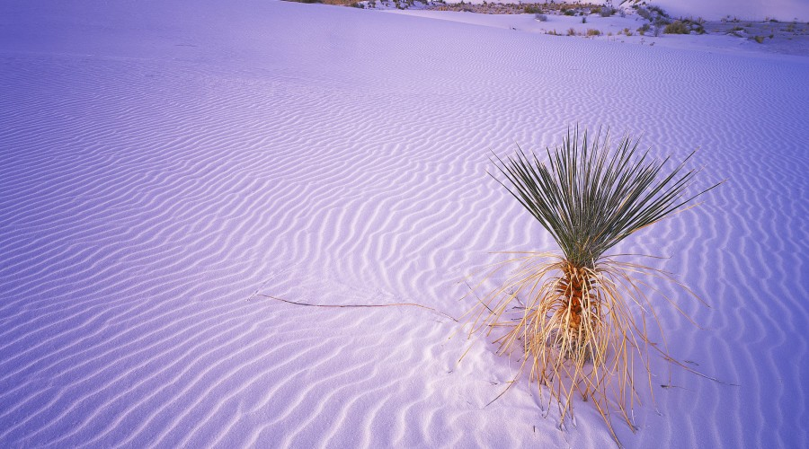 White Sands Photography Workshop image
