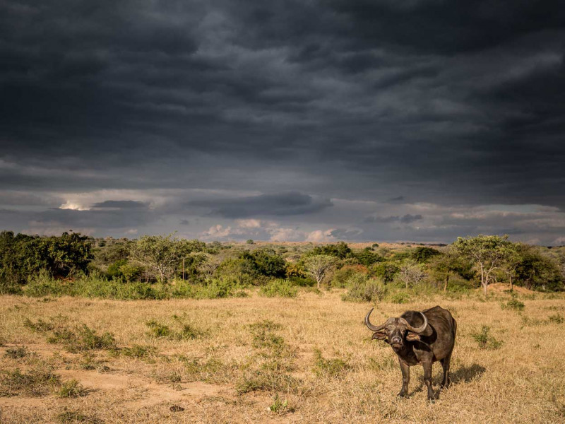 Wildlife Photography and Conservation Volunteer Project in South Africa