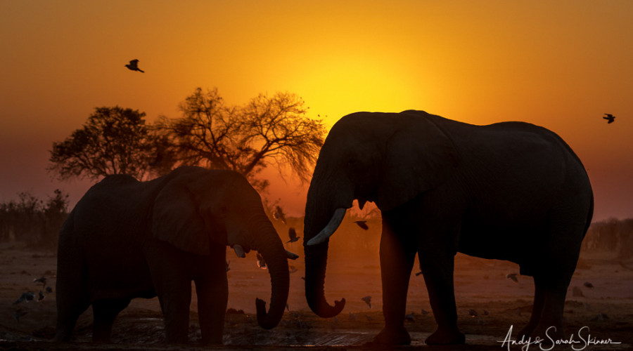 Botswana Photography Safari: 12-days in the African Bush image