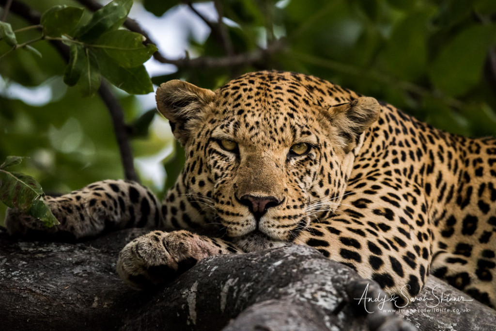 Botswana Photography Safari: 12-days in the African Bush