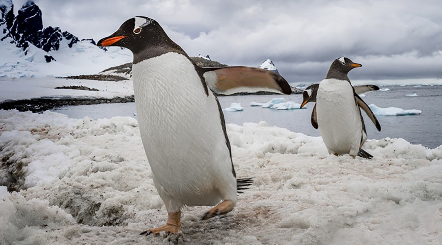 Antarctica: the 7th Continent! image