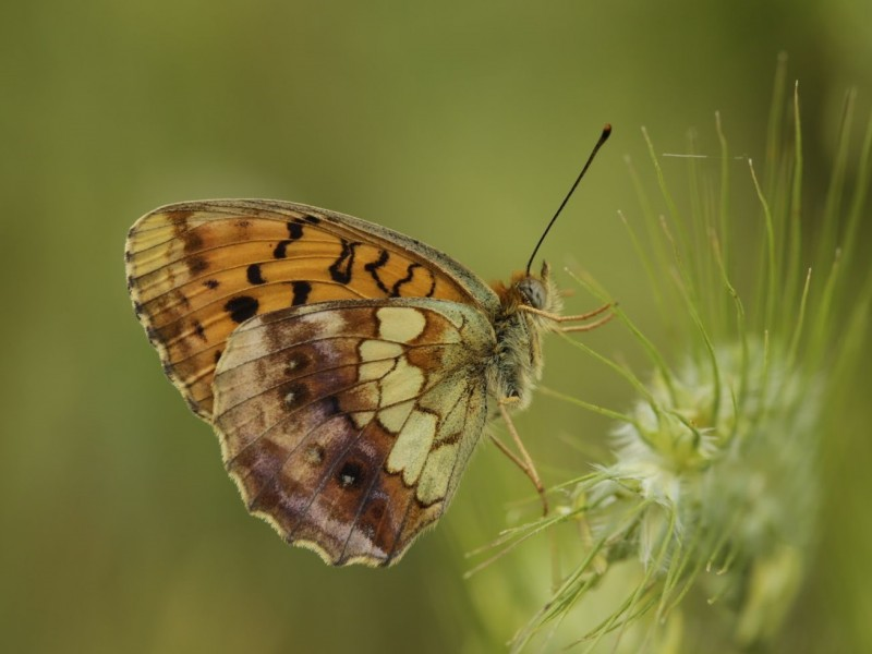 Butterflies and Macro Photography