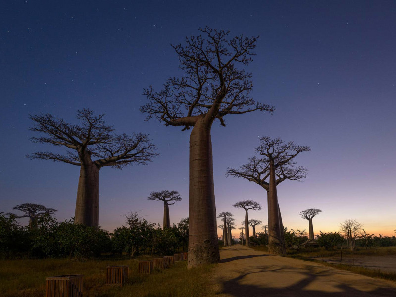 Madagascar Photography Tour: 15-day Island Adventure