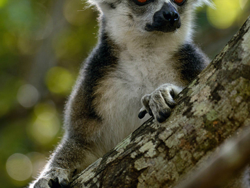 Madagascar Photography Tour: 15-day Island Adventure Gallery Thumbnail