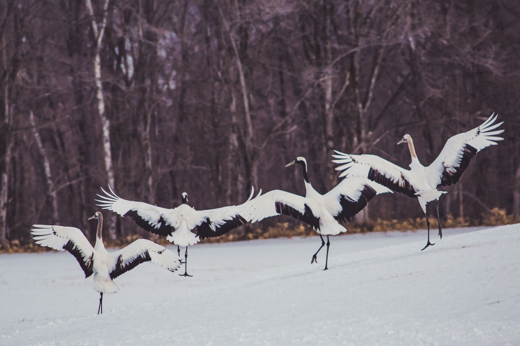 Japan Photography Tours: Autumn, Winter and Spring
