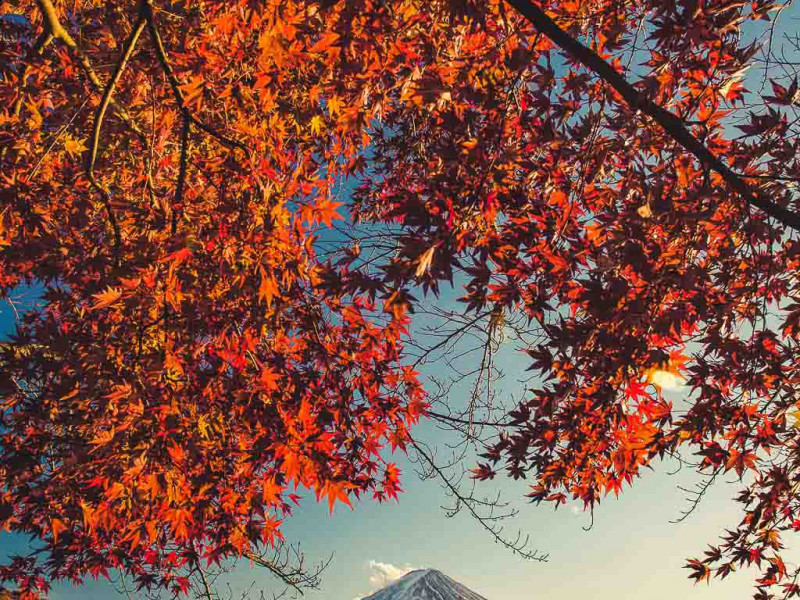 Japan Photography Tours: Autumn, Winter and Spring Gallery Thumbnail
