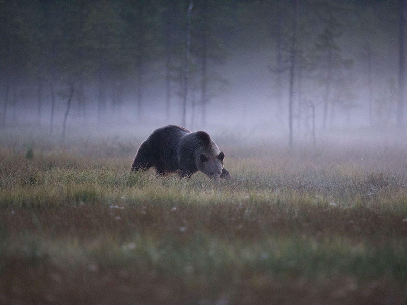 Brown Bear Photography Hide in Finland