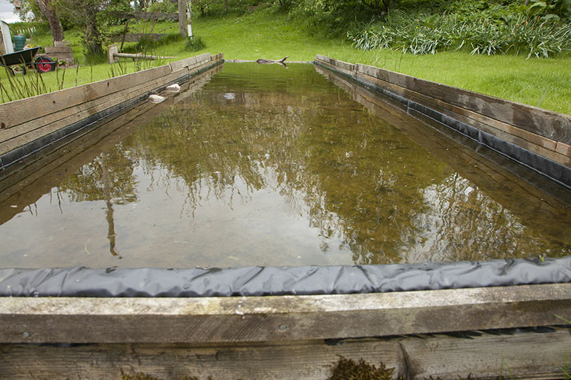 How to build a bird reflection pool nature ttl for Garden reflecting pool