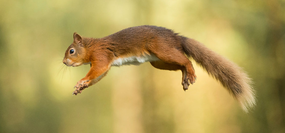 How to Photograph Fast-moving Mammals
