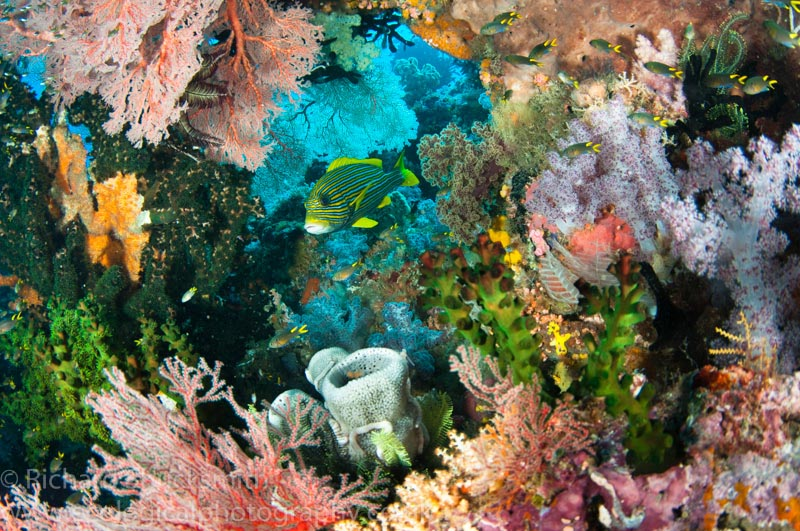 Colourful Coral Underwater