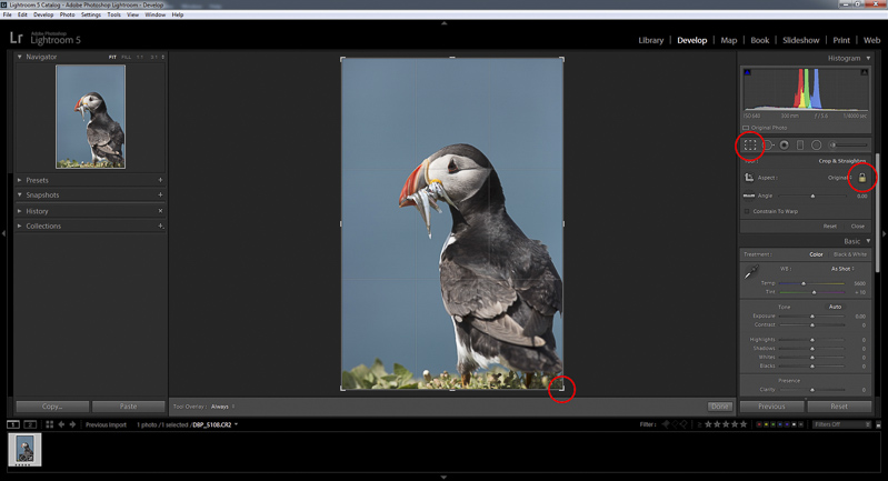Cropping Lightroom RAW File