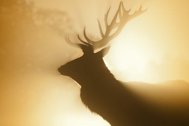 Deer Rut Photography