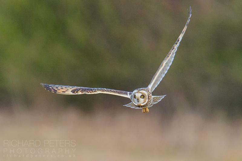 Photographing Birds in Flight