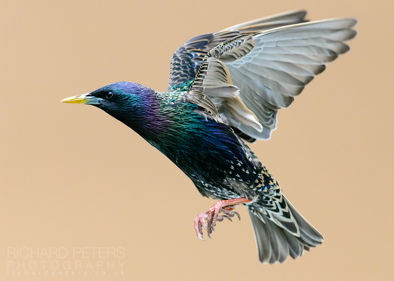 How to Photograph Birds Flying