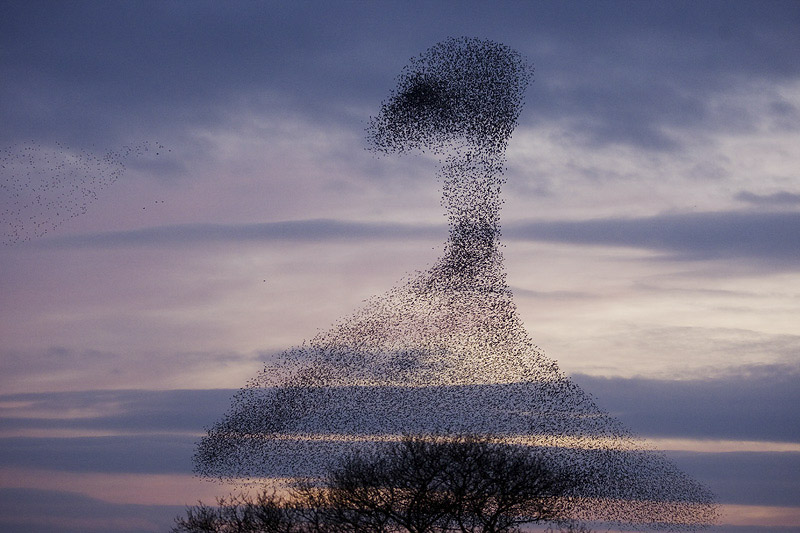 How to Photograph Flocks of Birds