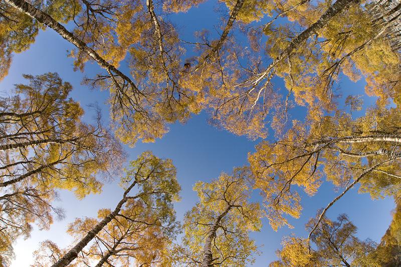 wide-angle autumn trees