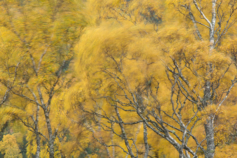 blur autumn trees