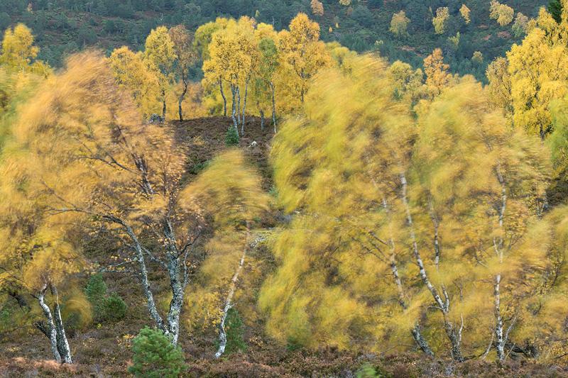 autumn tree photography
