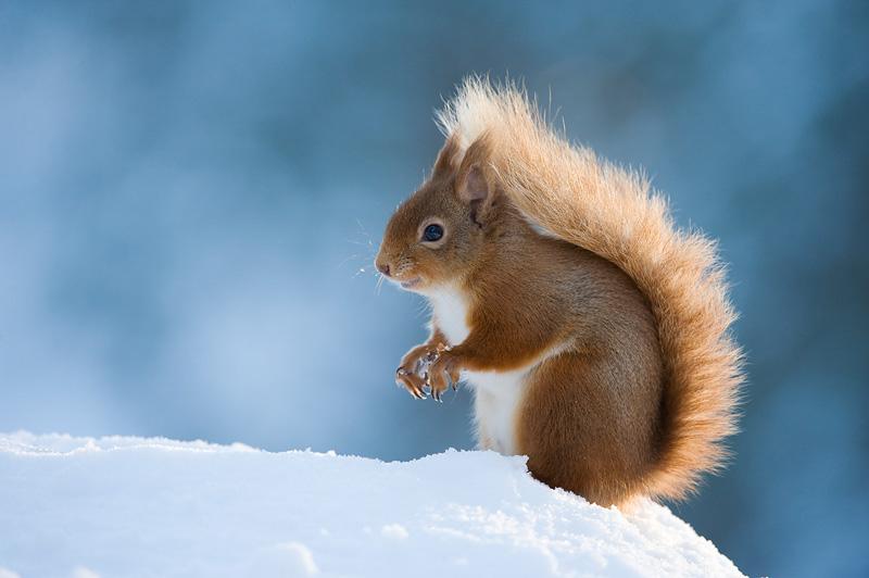 Winter Wildlife Photography Ideas Nature Ttl
