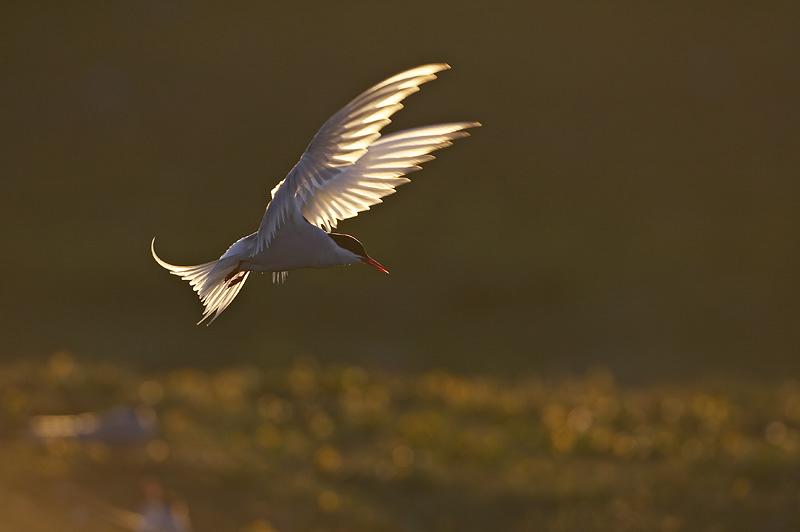 backlighting in wildlife photography