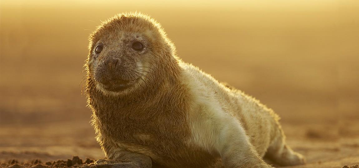 how to take backlit wildlife photos
