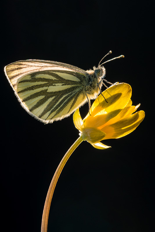 backlighting butterfly photos