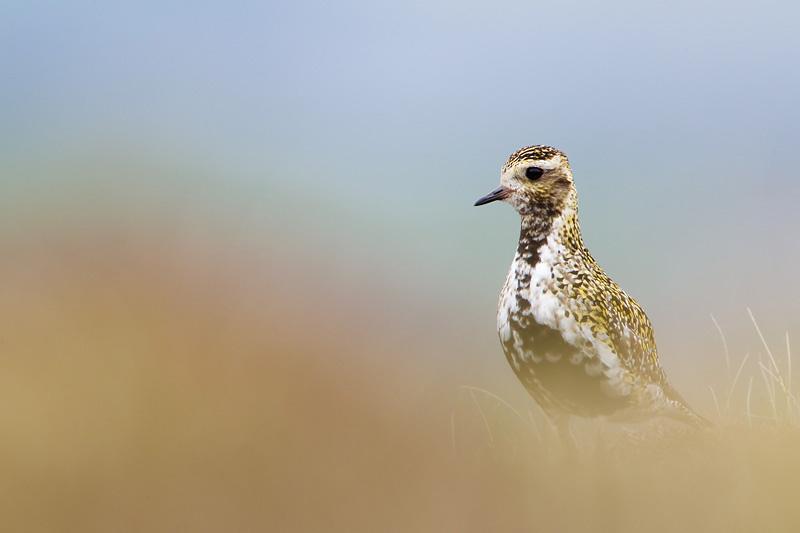 wildlife photography minimalist booked