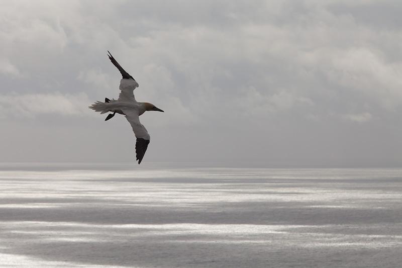 mark hamblin seabirds