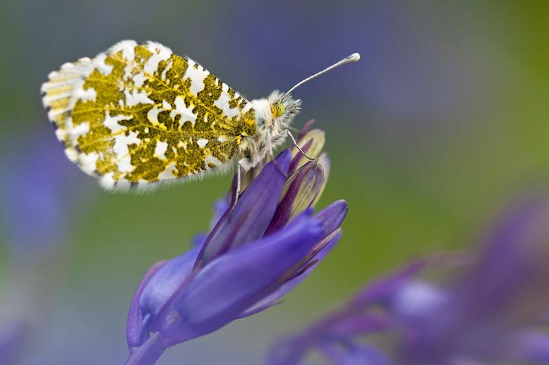 butterfly macro photos