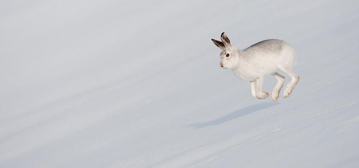 minimalist wildlife photography