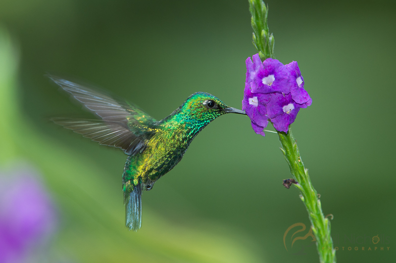 high speed bird photography