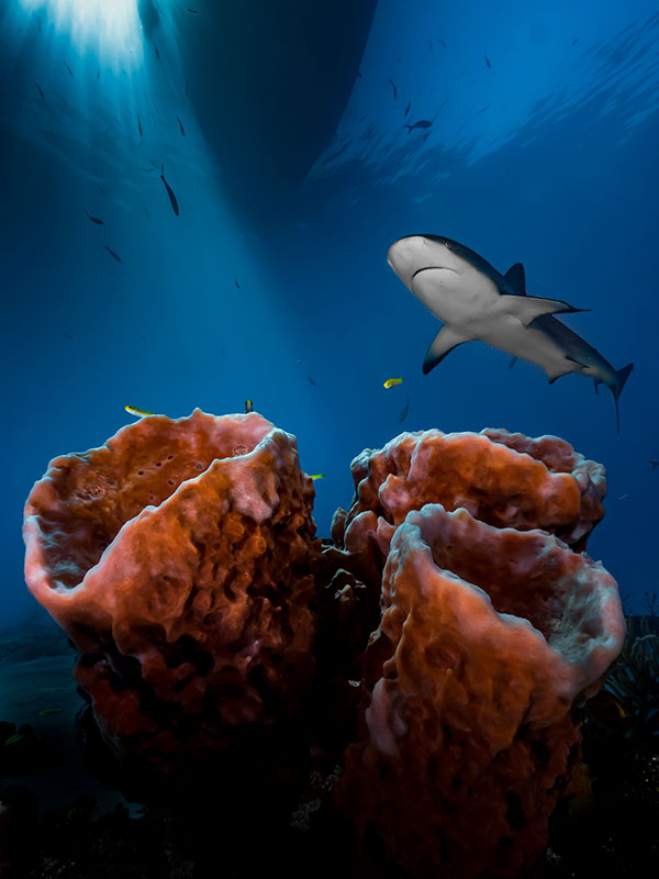 underwater photographer of the year winners