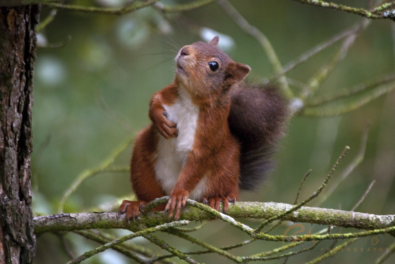 wildlife photography budget