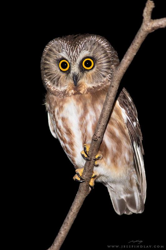 jess findlay owl