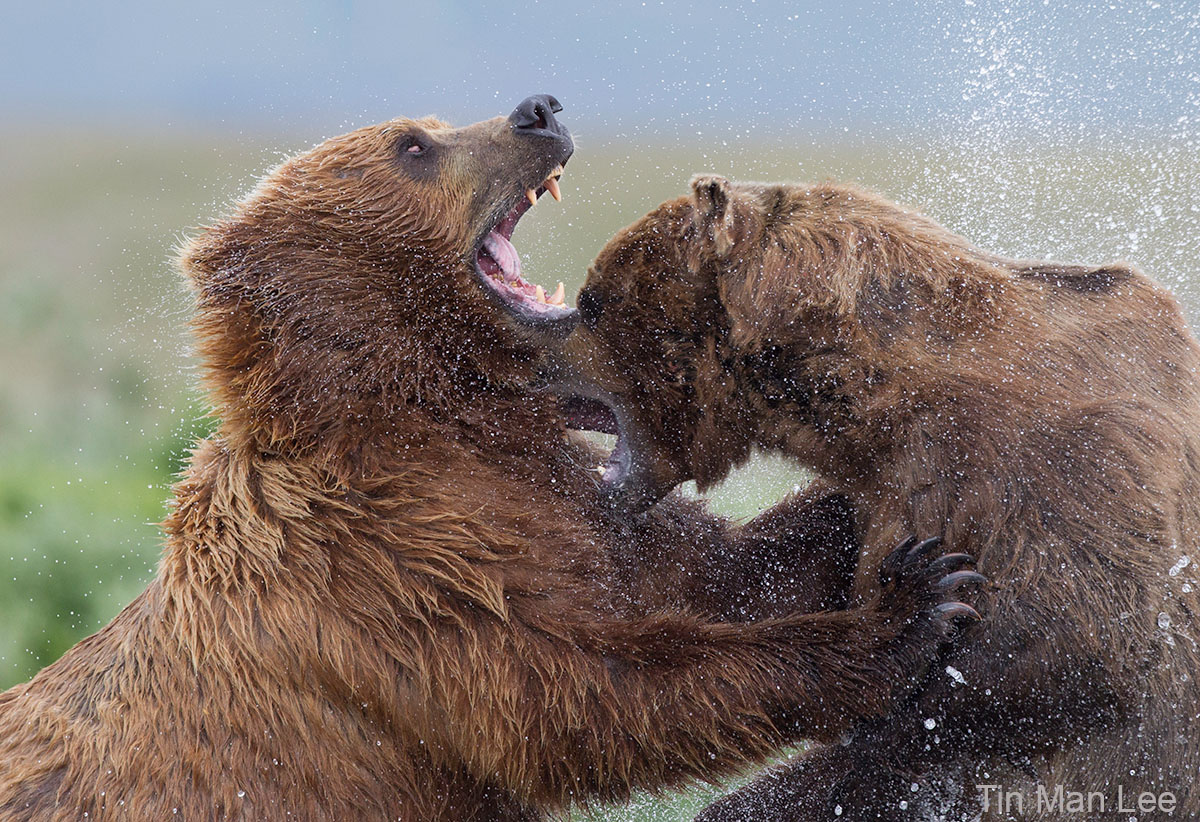 tin man lee wildlife photo tips