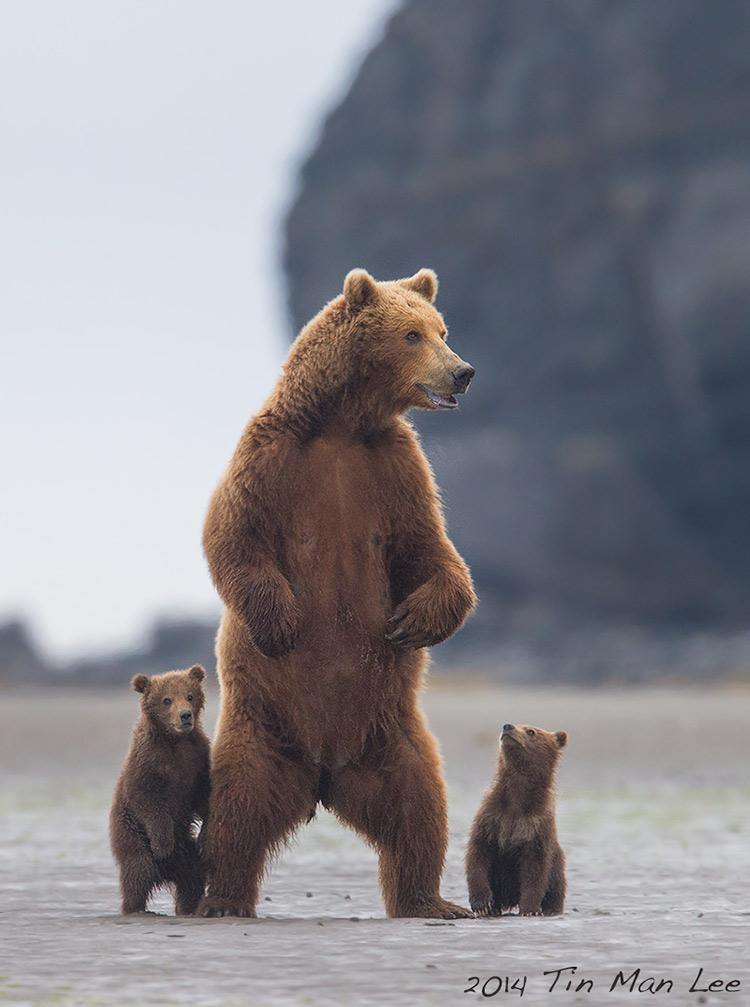 how to evoke emotion in wildlife photos