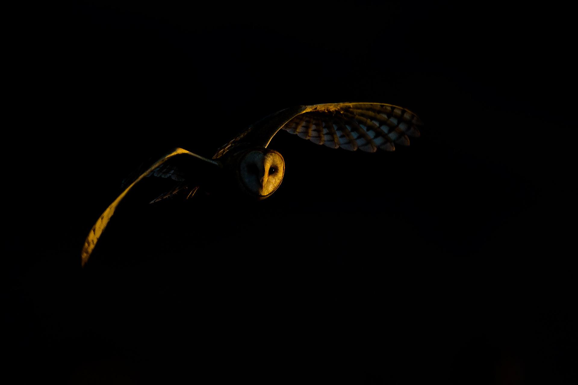 wildlife photography light tin man lee