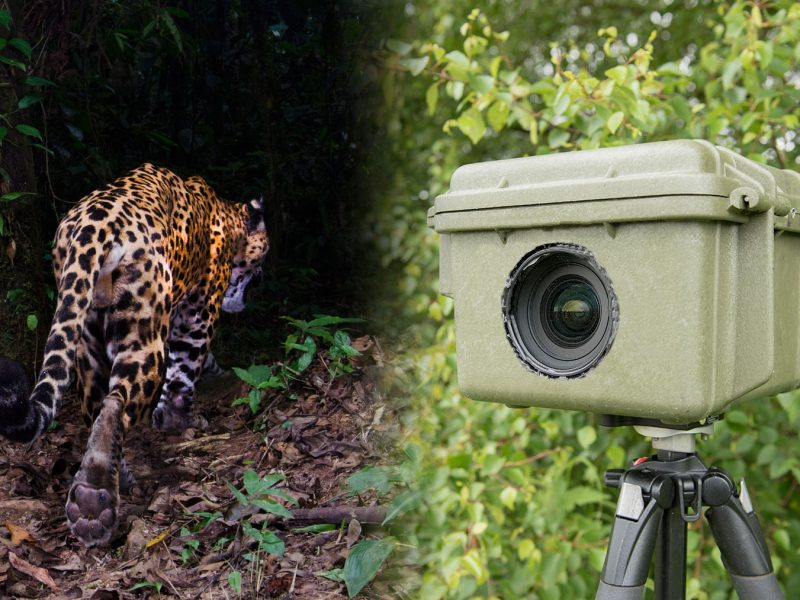 how to build a camera trap housing