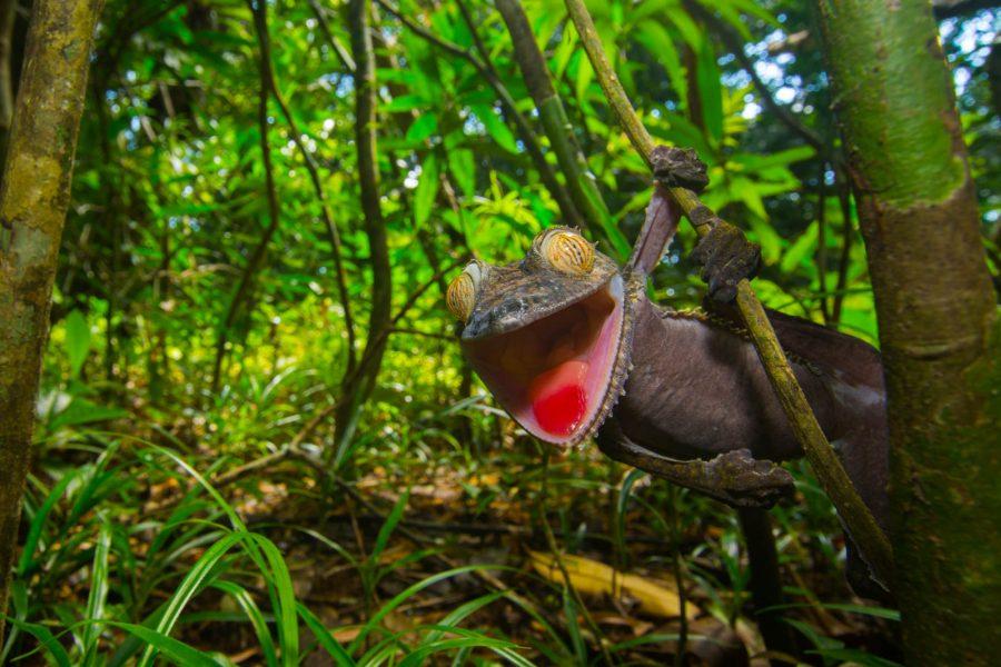Home » Inspiration » Wildlife » The Wildlife of Madagascar's ...