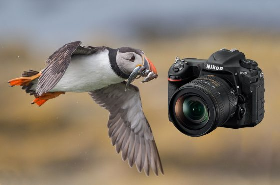 nikon d500 review wildlife photography