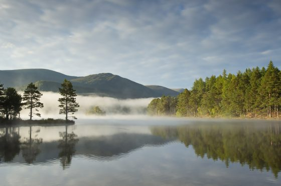Pine trees reflected in lake on misty morning