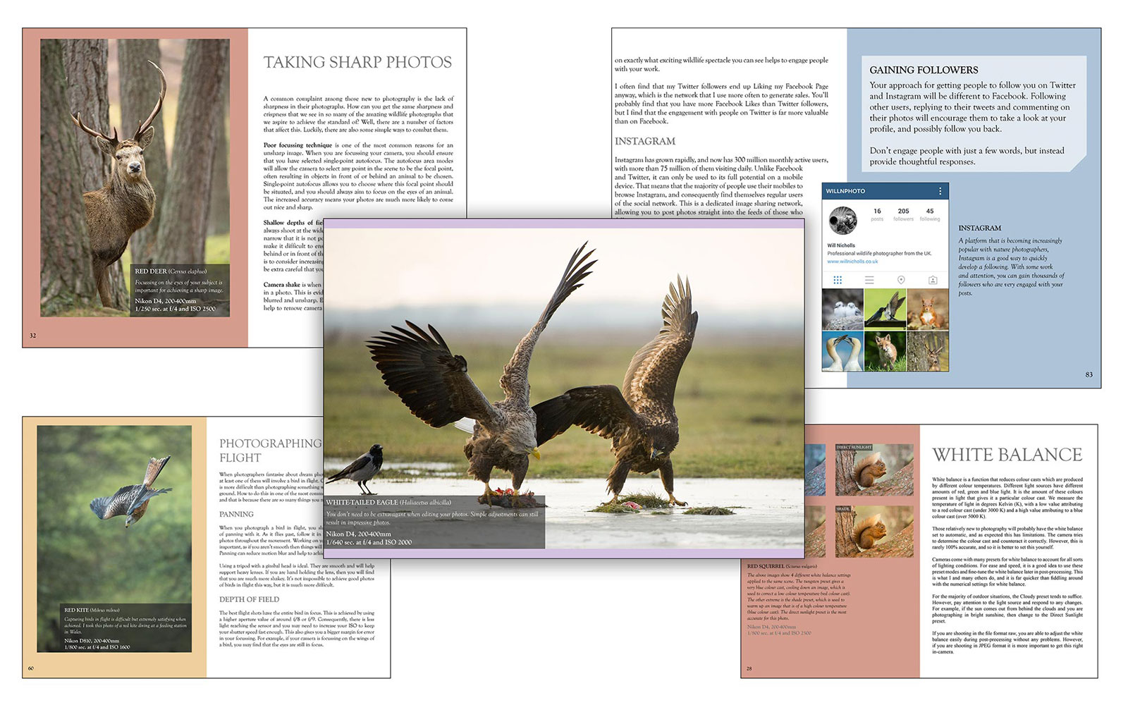So you want to be a wildlife photographer nature ttl ebooks fandeluxe Gallery