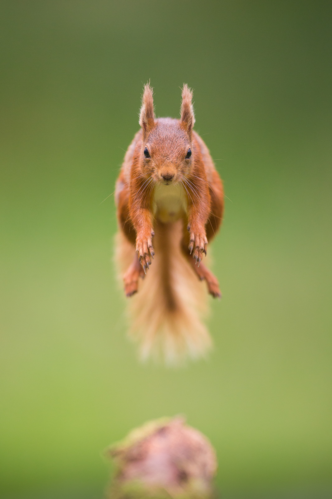 red squirrel photography workshop nature ttl