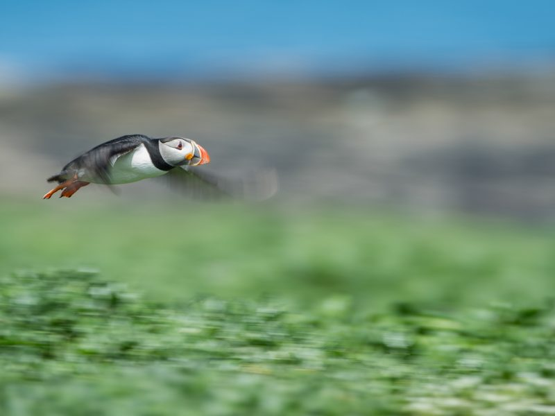 how-to-pan-with-animals-motion-blur-3