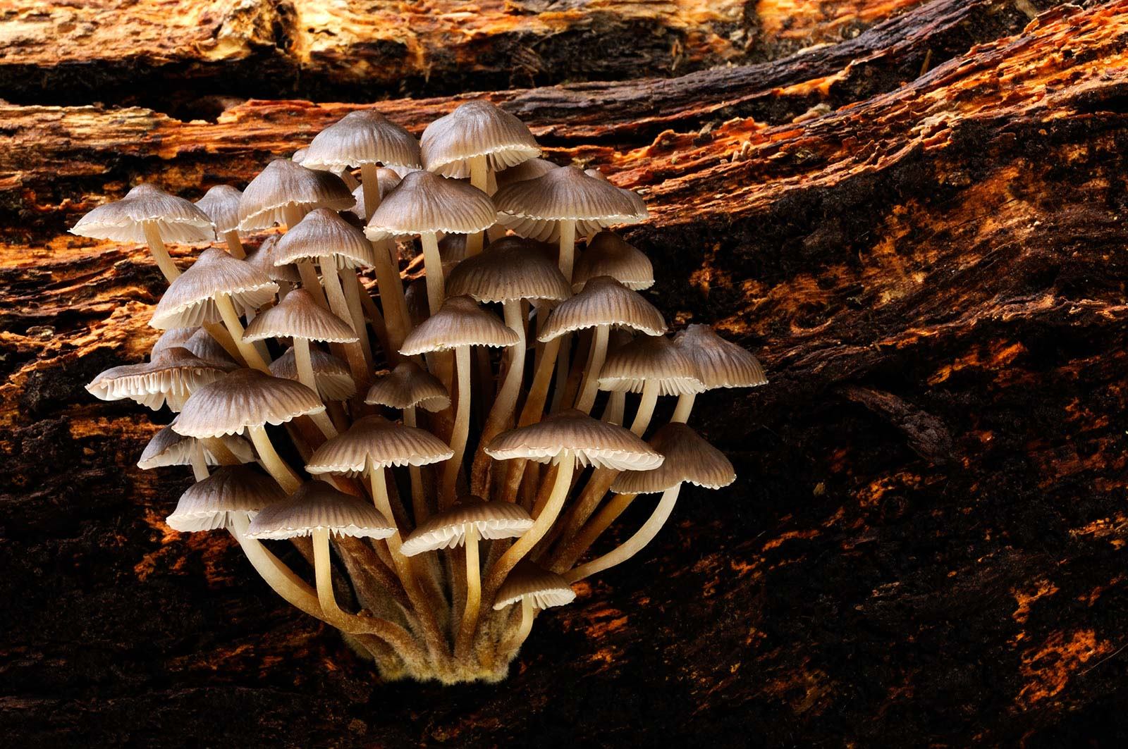 tips for photographing fungi