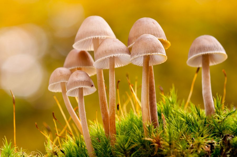 how to photograph fungi