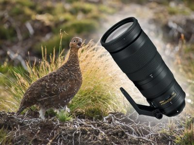 nikon-200-500mm-review-featured