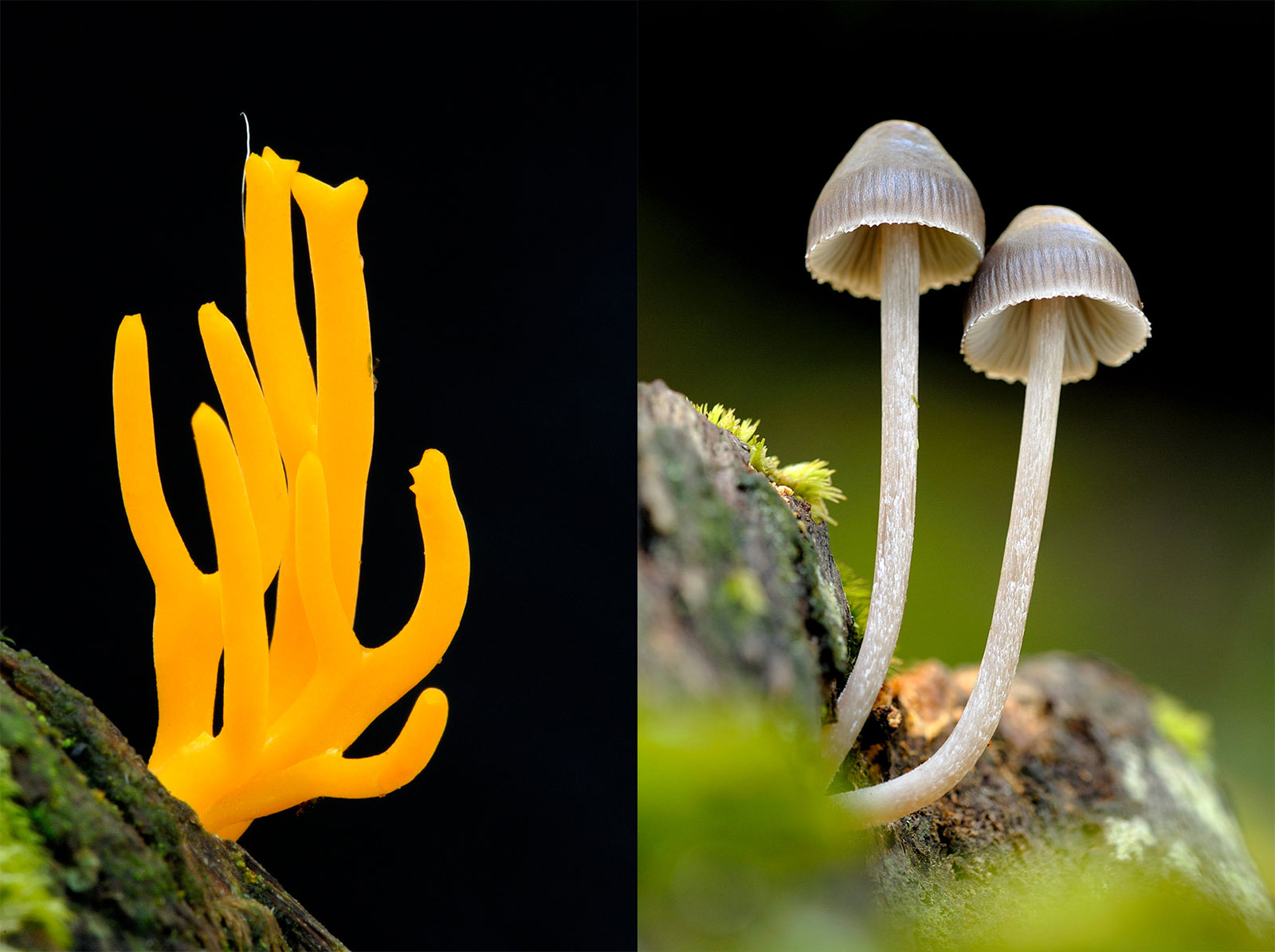 how to photograph mushrooms