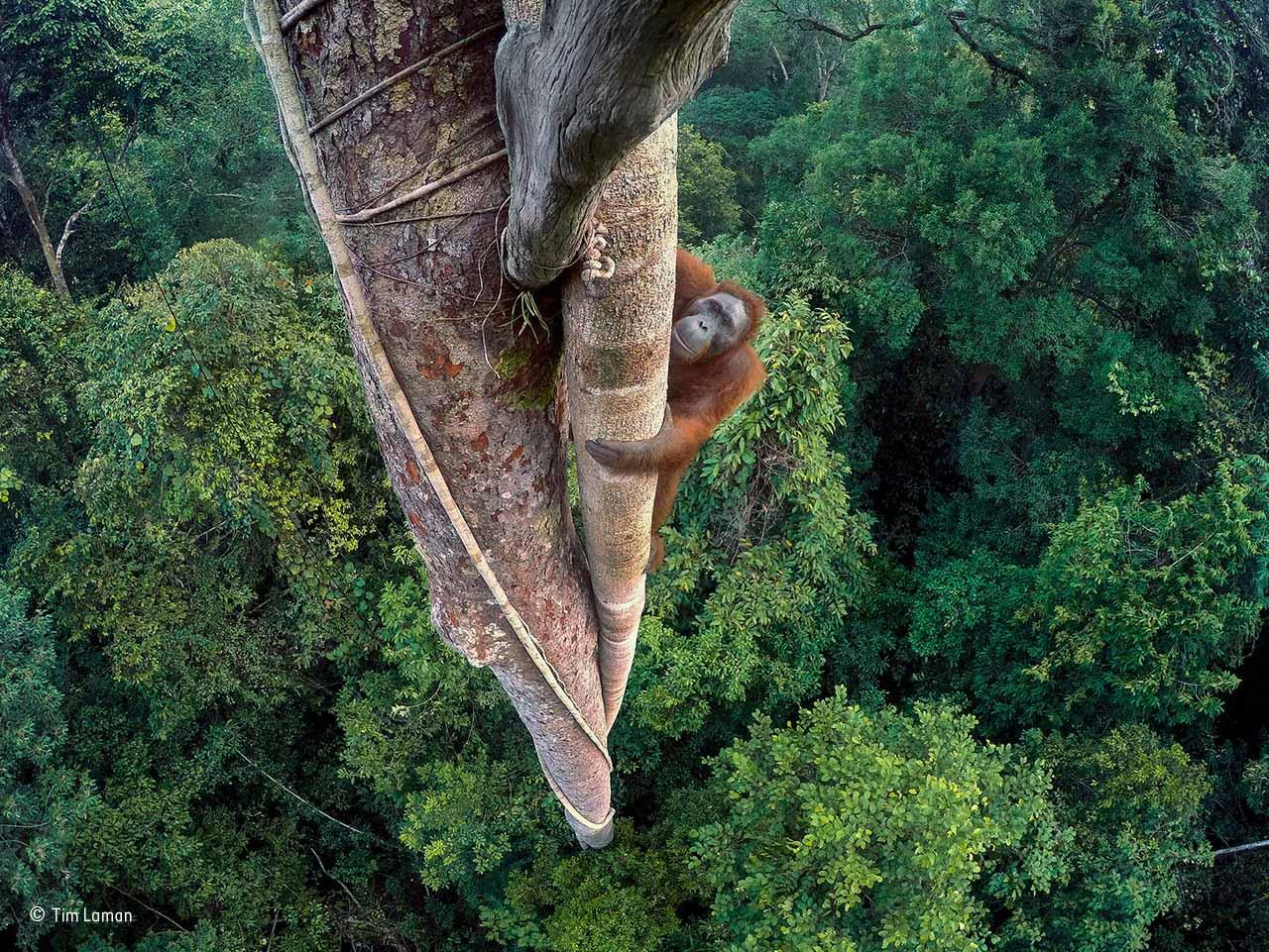 wildlife photographer of the year 2016 winners